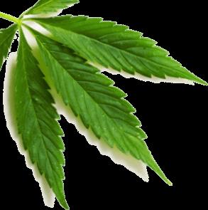 leaf-layer1