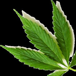 leaf-layer11
